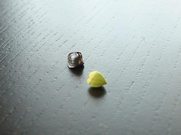 seeds of Soba